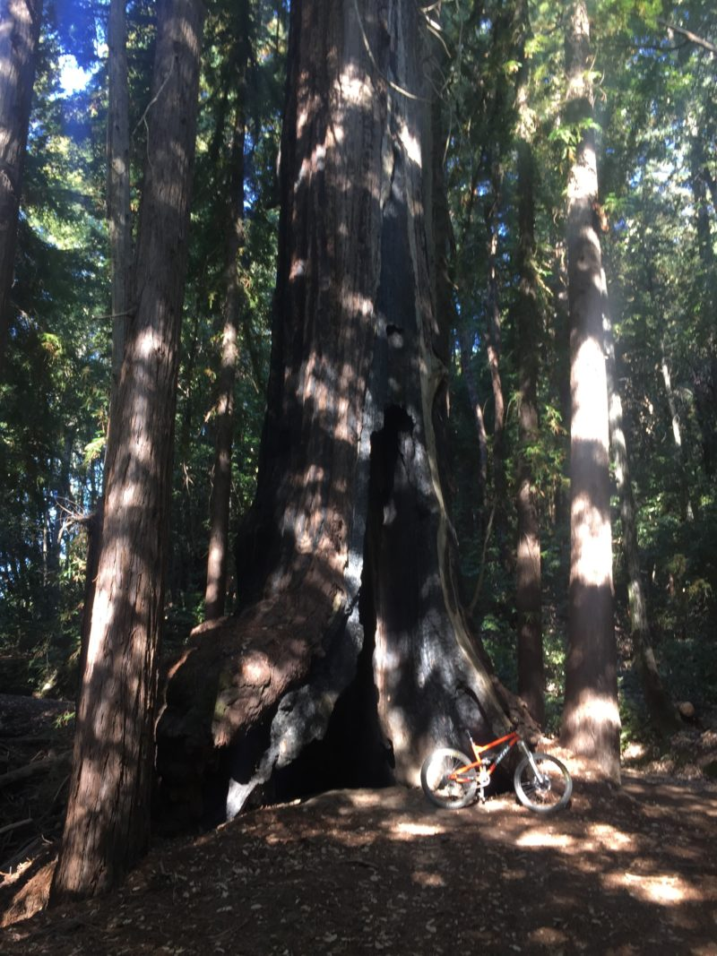 redwoods-and-princess-dirt-monster